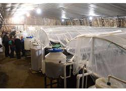 Ферма поразведению креветок открыта вКалужской области