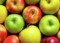 Первую очередь комплекса похранению яблок открыли вЛипецкой области