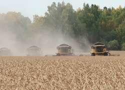 Тюменская область собрала рекордный урожай зерновых