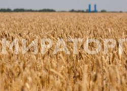 «Мираторг» совместно сФАНО запускает вСмоленской области проект позамещению импорта семян