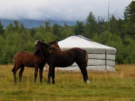 Фото лошадей бурятской породы