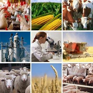 Амурские сельхозтоваропроизводители