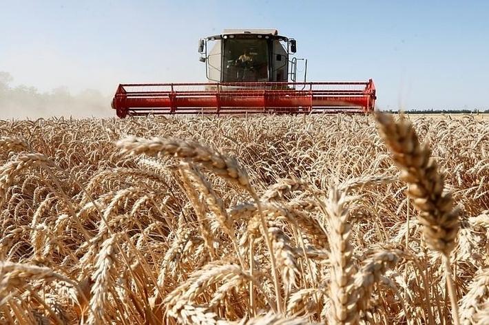Картинки по запросу Ставрополье в след за Краснодаром собрали рекордный урожай