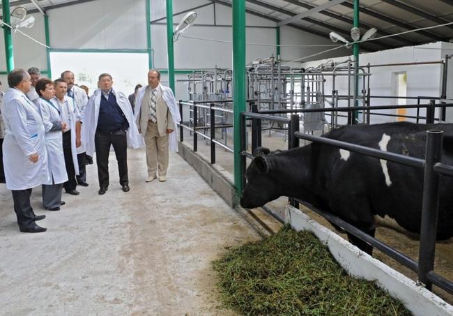 некоторые как построить бизнес на мелком животноводстве июле