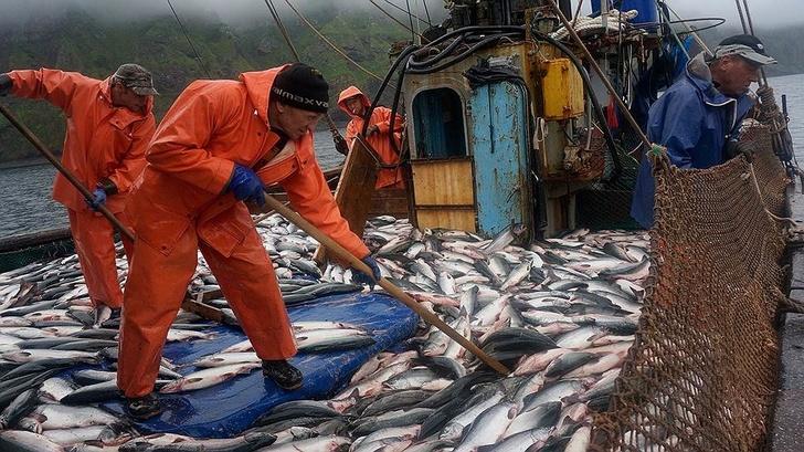 «Нацрыбресурс» организовал регулярный сервис по доставке рыбопродукции от борта до прилавка
