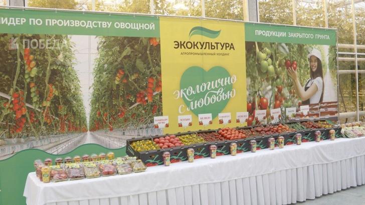 На Ставрополье начато строительство новой очереди тепличного комплекса «Солнечный дар»