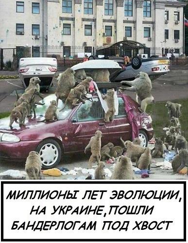 http://sdelanounas.ru/i/a/w/1/aW1nLWZvdGtpLnlhbmRleC5ydS9nZXQvNDYxNjUvMTAzMzU3NDI0LjEvMF8xMjExZjlfZjQyMmEwYWFfTA==.jpg