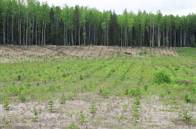 посадка леса фото