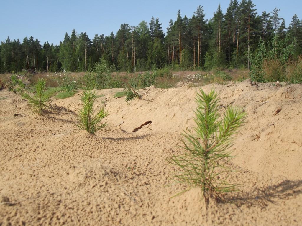 В Пермском крае каждый год восстанавливают 32 тыс. га леса