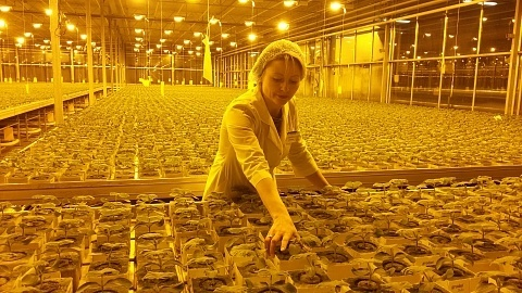 4 гектара теплиц введены в строй в Нижегородской области