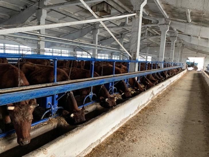 В Ставропольском крае модернизировали молочно-товарную ферму СПК «Племзавод Вторая Пятилетка»