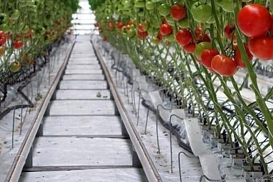 Урожай тепличных овощей на 80% больше, чем годом ранее (данные на 4.05.2017)