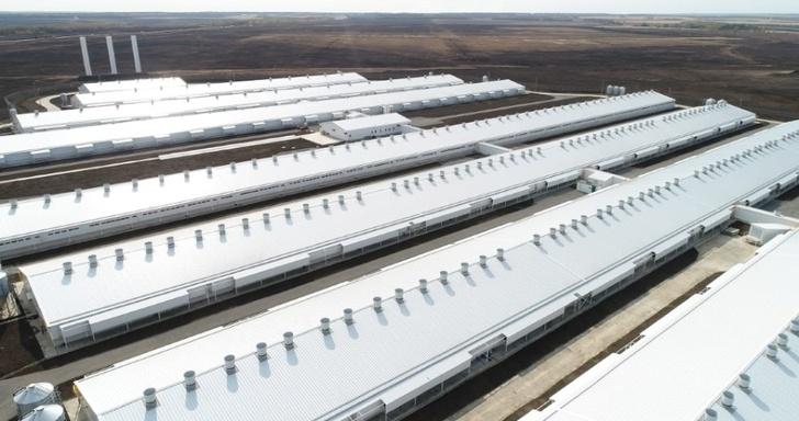 Группа компаний АГРОЭКО открыла три новых свиноводческих комплекса