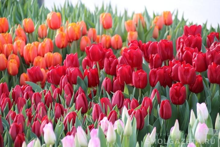 Первая очередь цветочного тепличного комплекса введена в Смоленской области