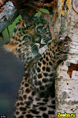 фото из Зоопарка природоохранного фонда(WHF)