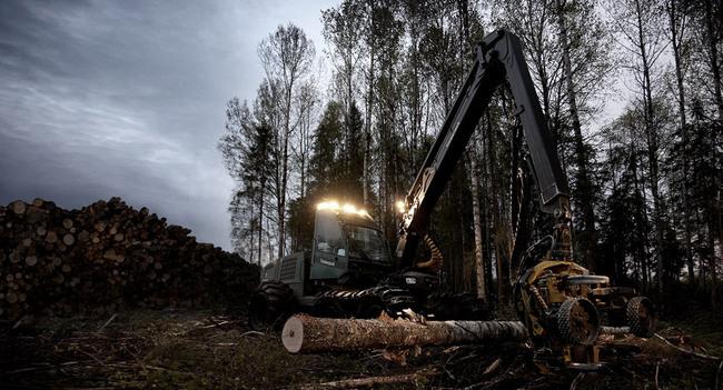 Россия сократила в 2012 г. экспорт необработанной древесины на 15,9%