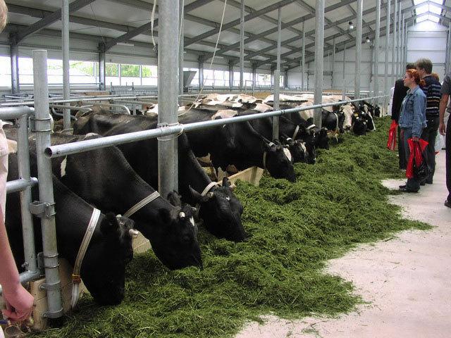 животноводческий комплекс на 1000 голов СПК «Ждановский» (открыт в 2007 году)