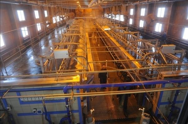 Стоимость Строительства Цеха По Переработке Молока