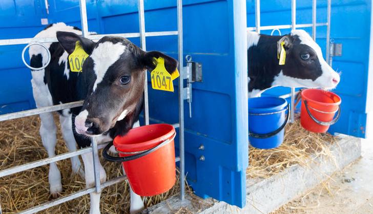 На новое животноводческое предприятие Сахалина прибыли три крупные партии КРС