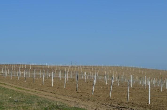 Аграрии Дагестана на четверть перевыполнили план весенней закладки виноградников