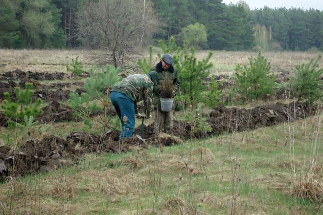 За год в Белгородской области посадили 7 тысяч гектаров защитного леса