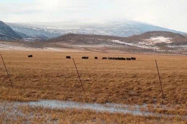 Гора Ногодояха на границе Ямала и Коми – новый туристический бренд Европы