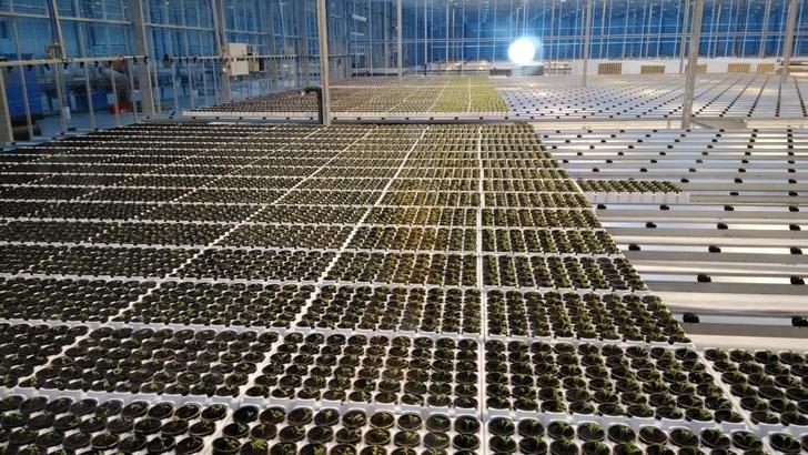 Обзор: в феврале 2018 в России открылось 18 предприятий агропрома