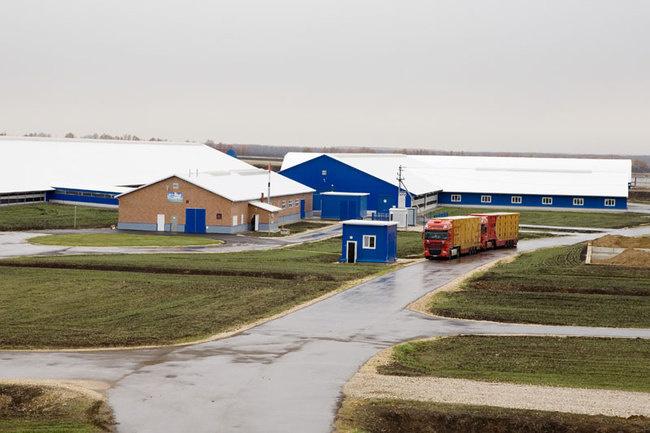 молочно-товарный комплекс в Наровчатовском районе Пензенской области