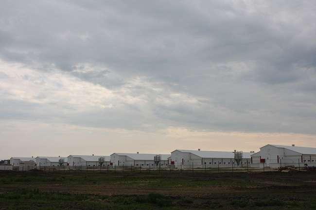 племенной птицеводческий репродуктор кур мясного направления в Трубчевском районе