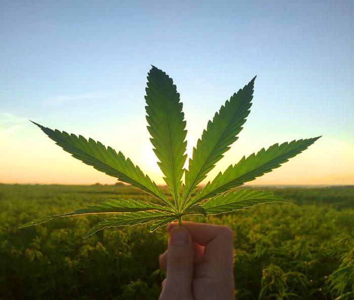 Всю жизнь курила коноплю какая нужна температура для выращивания марихуаны