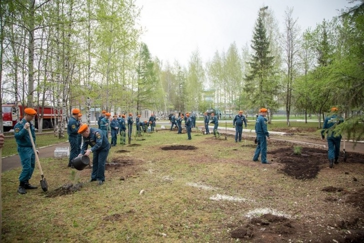 Высадка кедров на территории Вятского учебно-спасательного центра