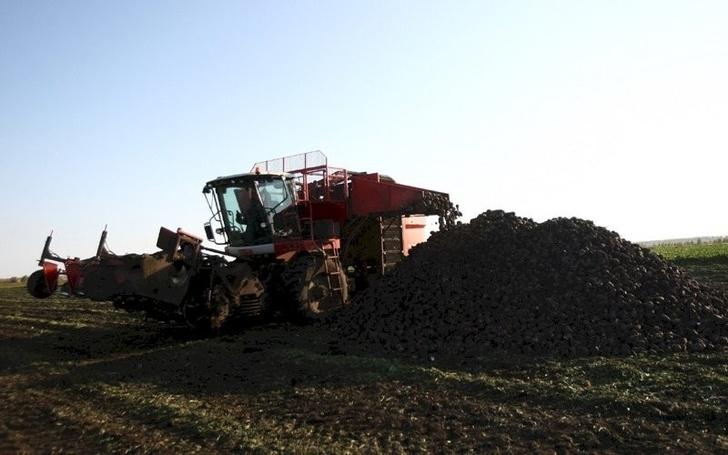 В Мордовии собран рекордный урожай сахарной свеклы