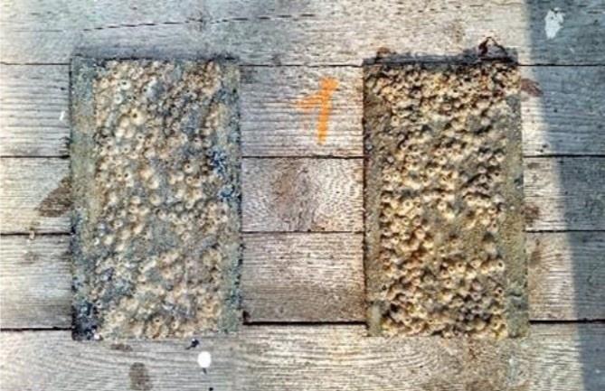 Первые испытания экологически безопасных противообрастающих покрытий для водного транспорта