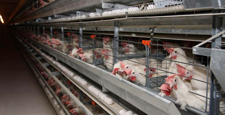 Новый цех запущен на птицефабрике в Хабаровском крае
