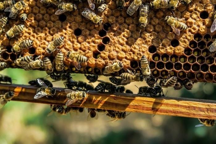 В 2016 году в Рязанской области произвели более 529 тонн мёда