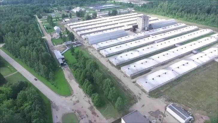 свинокмплекс Идаванг-Агро в Тосненском районе Ленинградской области