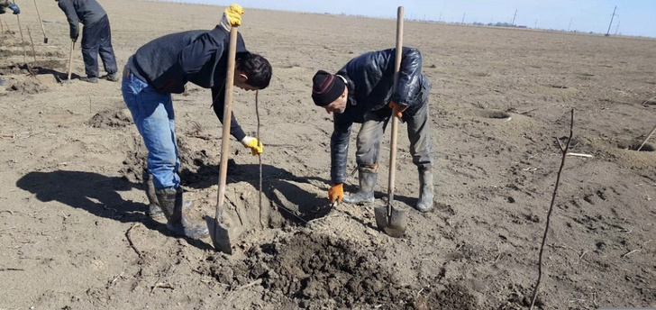 Закладка 100 гектаров новых садов началась в Хасавюртовском районе Дагестана