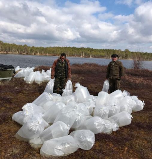Зарыбление озер. «Рыбокомбинат Ханты-Мансийский»