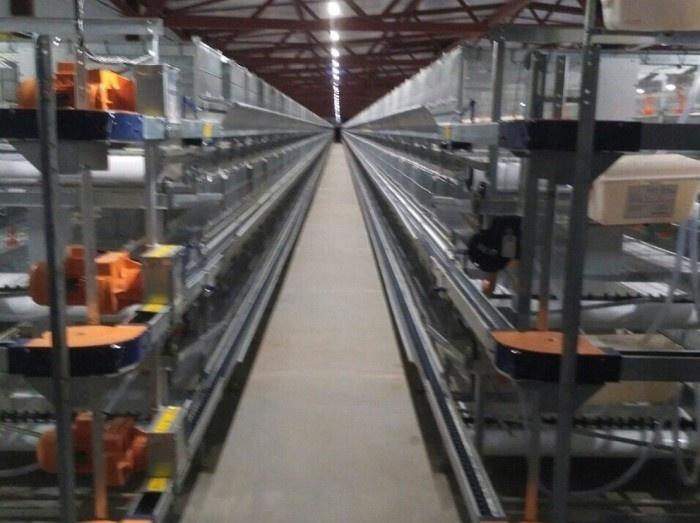 В Пензенской области открыта птицефабрика яичного направления
