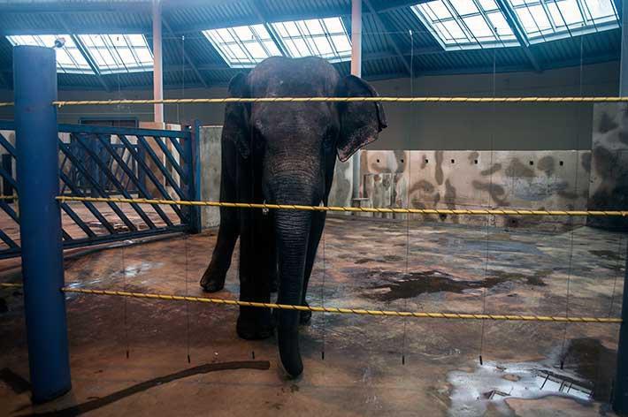 В слоновнике. Январь 2015 года. Фото: Ижогин Ян