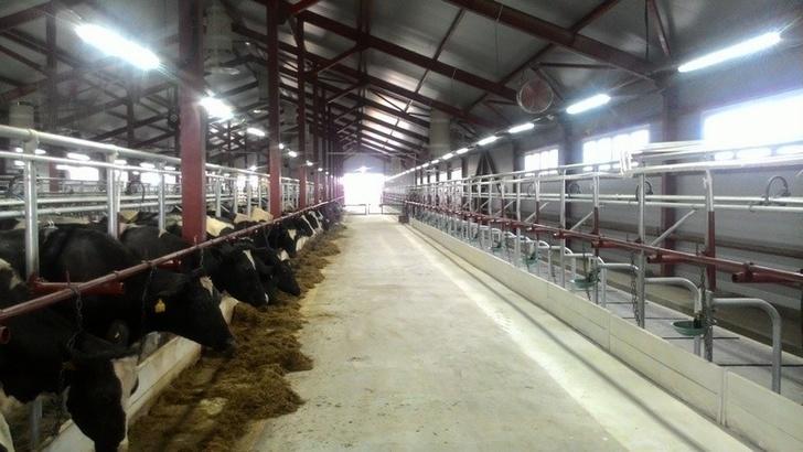 В Иркутской области открыта молочная ферма на 400 голов дойного стада