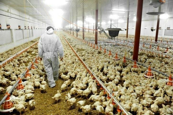 Углекислый газ используется на птицефабриках по нескольким причинам