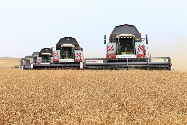 Крым увеличил сборы зерновых