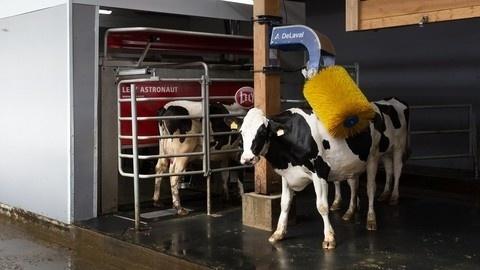 В Вологодской области начала работать новая молочная ферма (роботизированная)