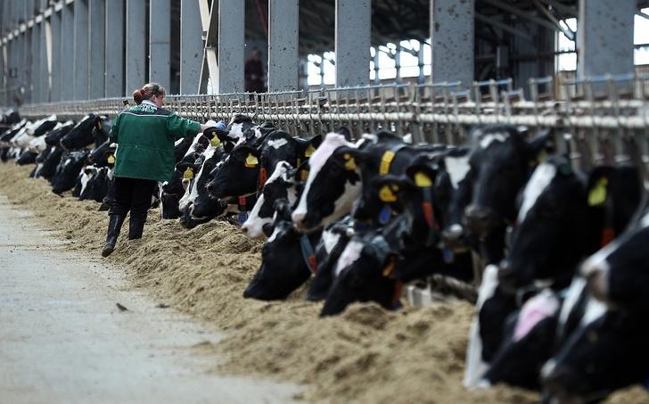 © www.dairynews.ru