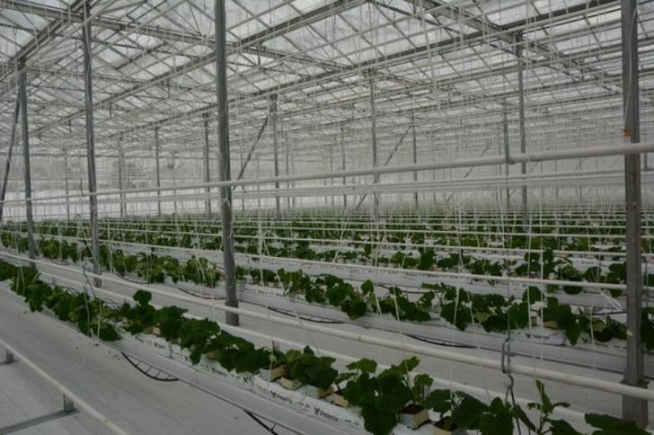 Обзор: в январе 2018 в России открылось 17 предприятий агропрома