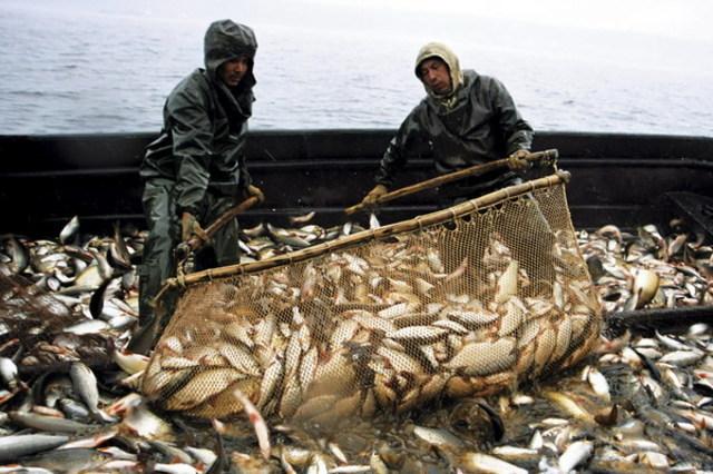 Дела рыбацкие: Реалии и перспективы