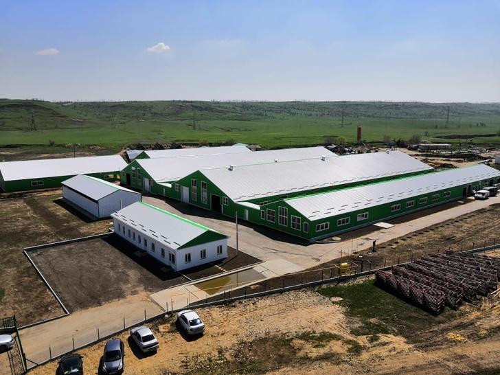 Козья ферма открылась на Ставрополье