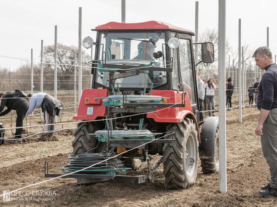 Ученые из Крыма начали новый цикл экспериментов над яблоками