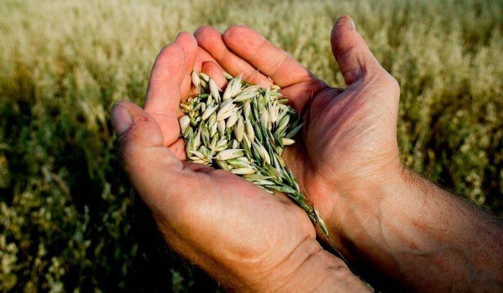 В Дагестане созданы семеноводческие хозяйства